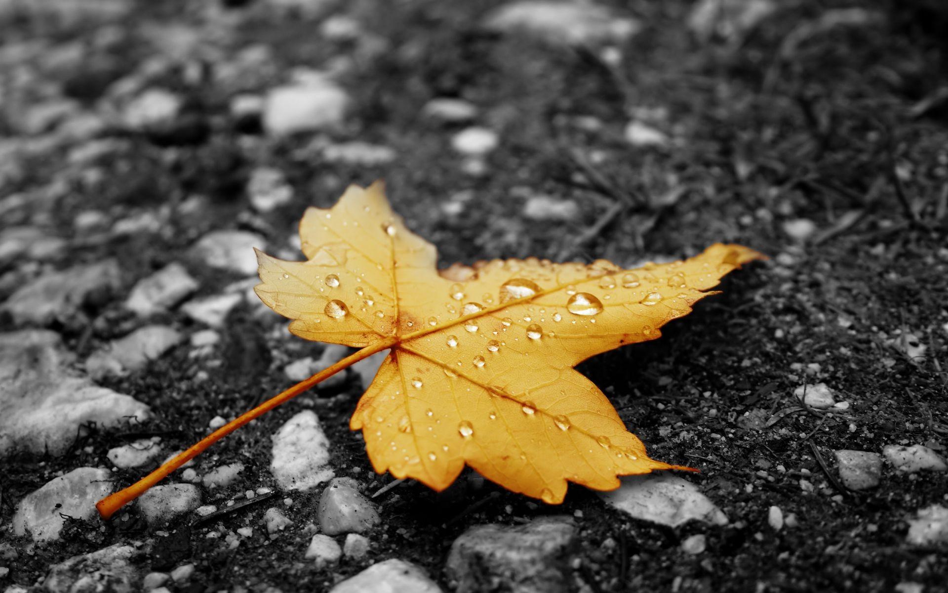 Дождь романтика фото