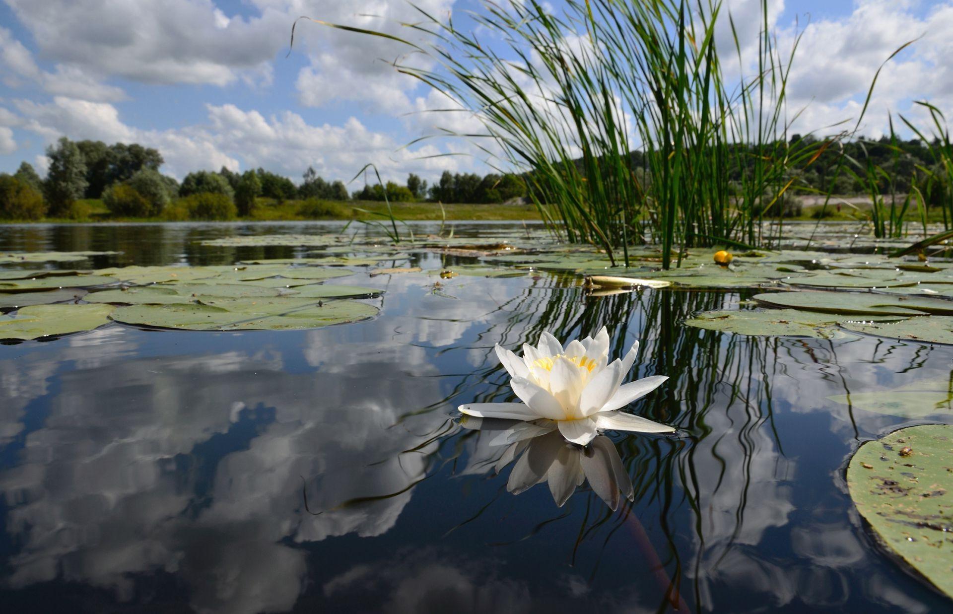 обои на рабочий стол лето вода природа цветы системы препятствуют попаданию