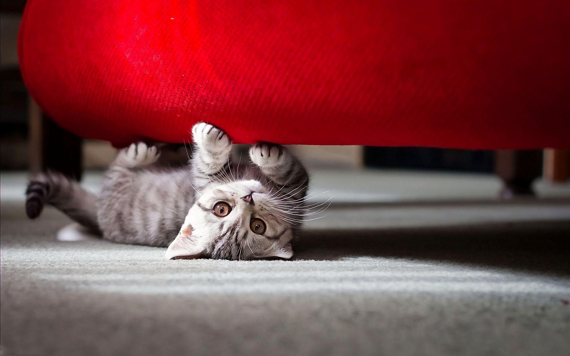 Выглядывающий из-за дивана кот скачать