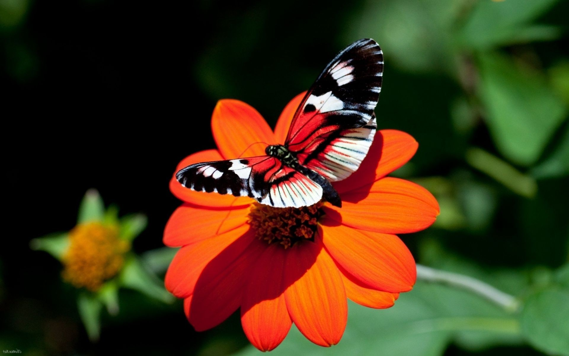 Бабочки на земле без смс