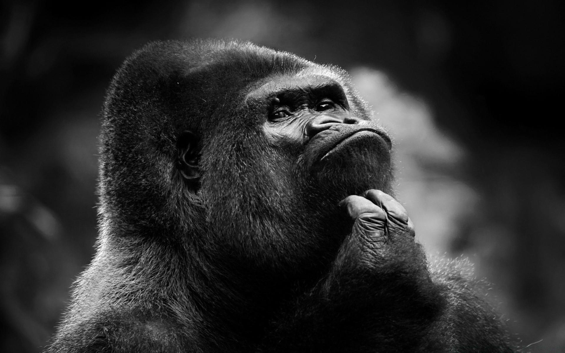 Прикольные черно белые картинки животные для, квартирами