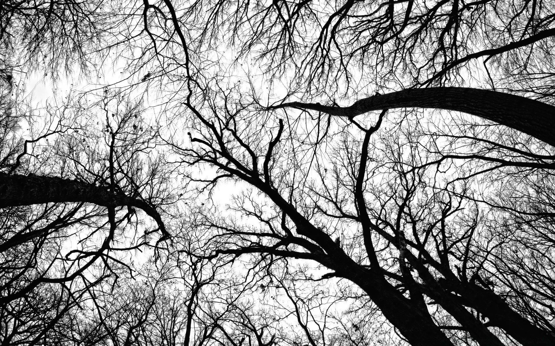Утро осень, крутые картинки дерево