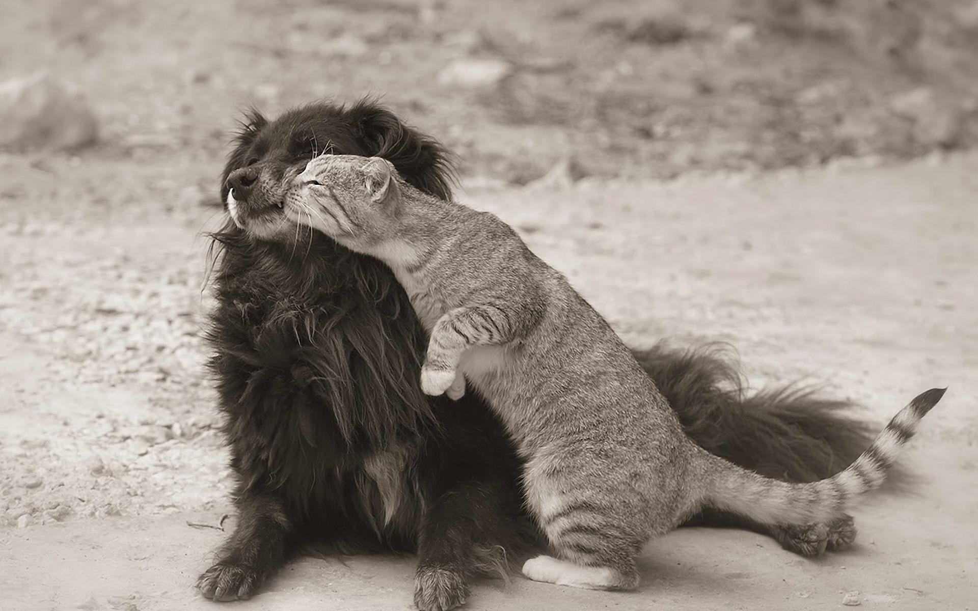 Прикольные картинки он и она коты