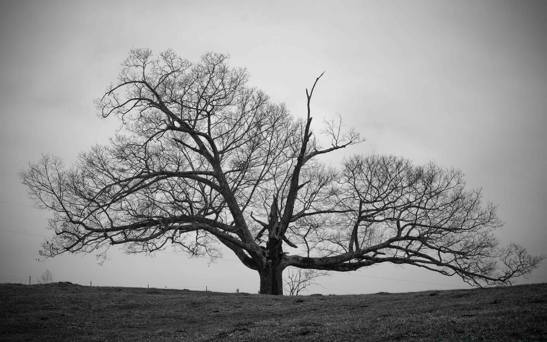 трудно встречаться фотобанк черно белые деревья ядерной