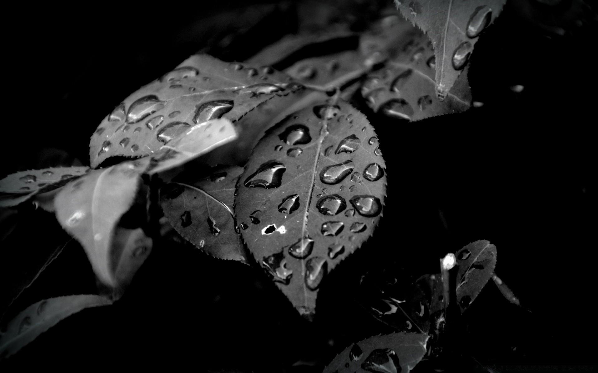 Черно-белые картинки на андроид