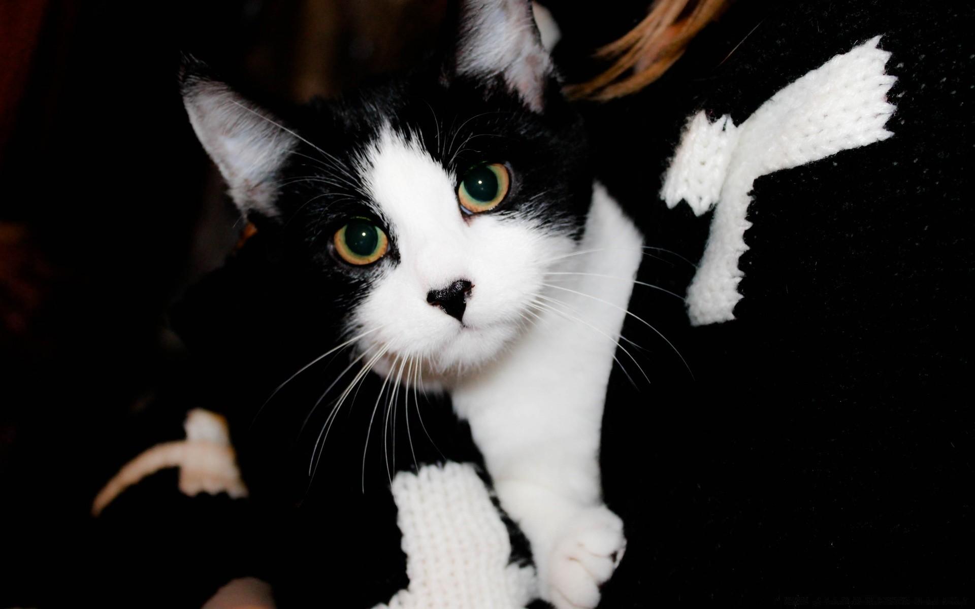 связывается черный и белый котята на столе картинка въезде город