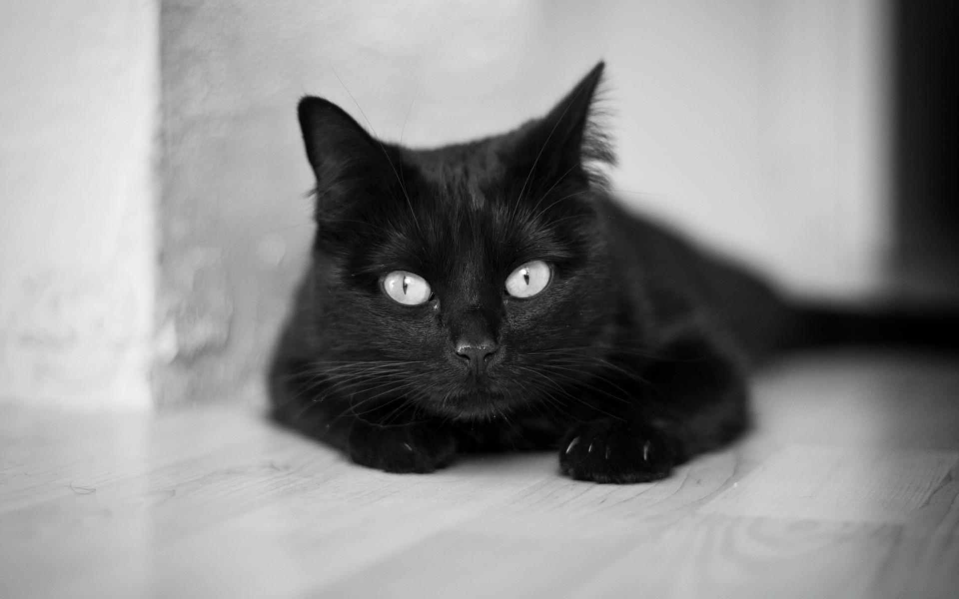 Картинки с кошечкой черно-белый