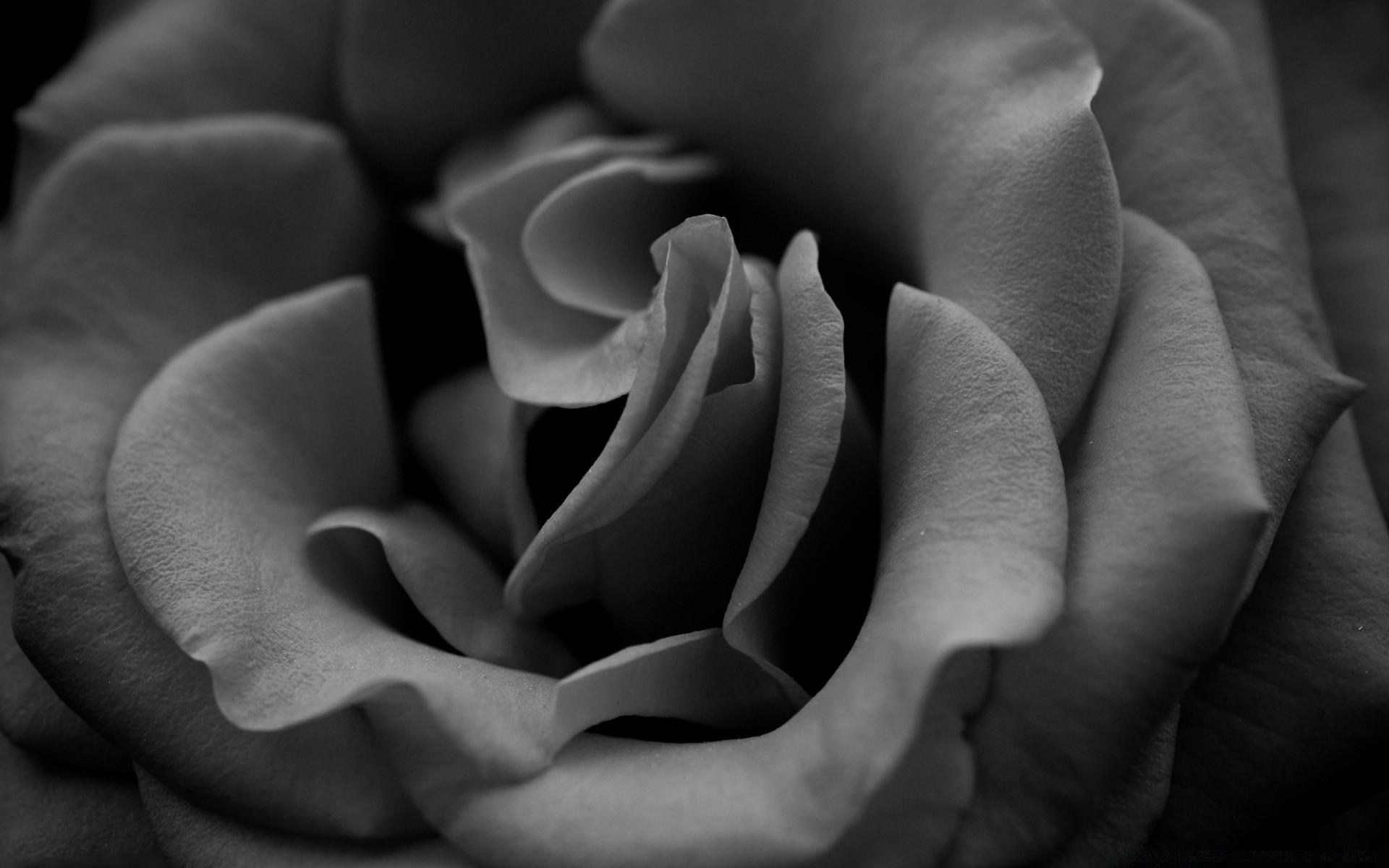 Картинки большого цветка черно белого