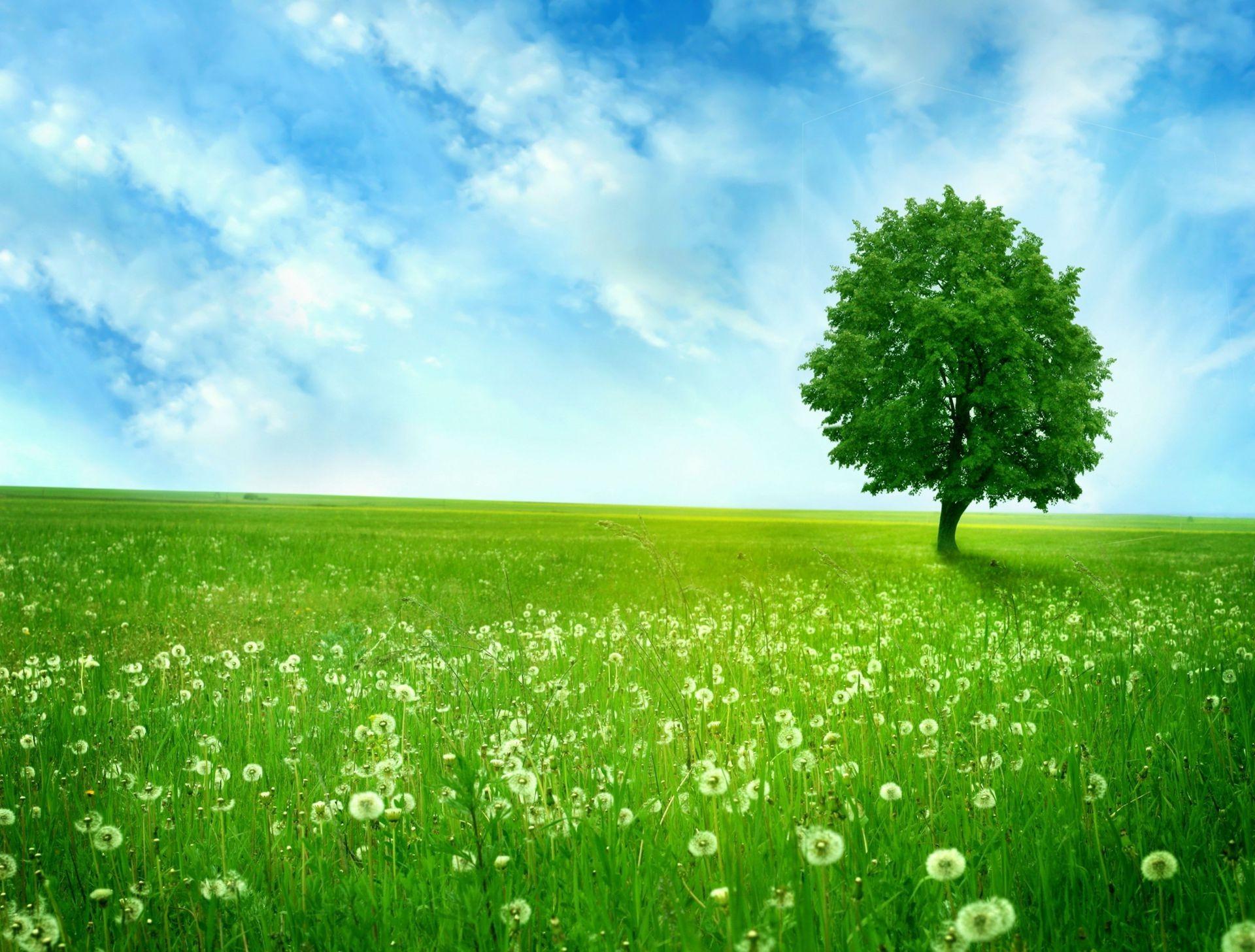 лужайка трава небо бесплатно