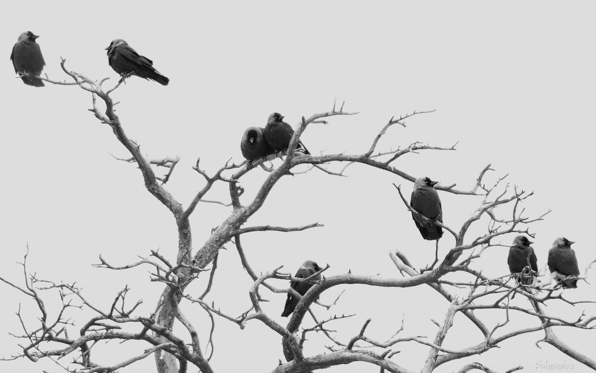 Уставшие птицы картинка для