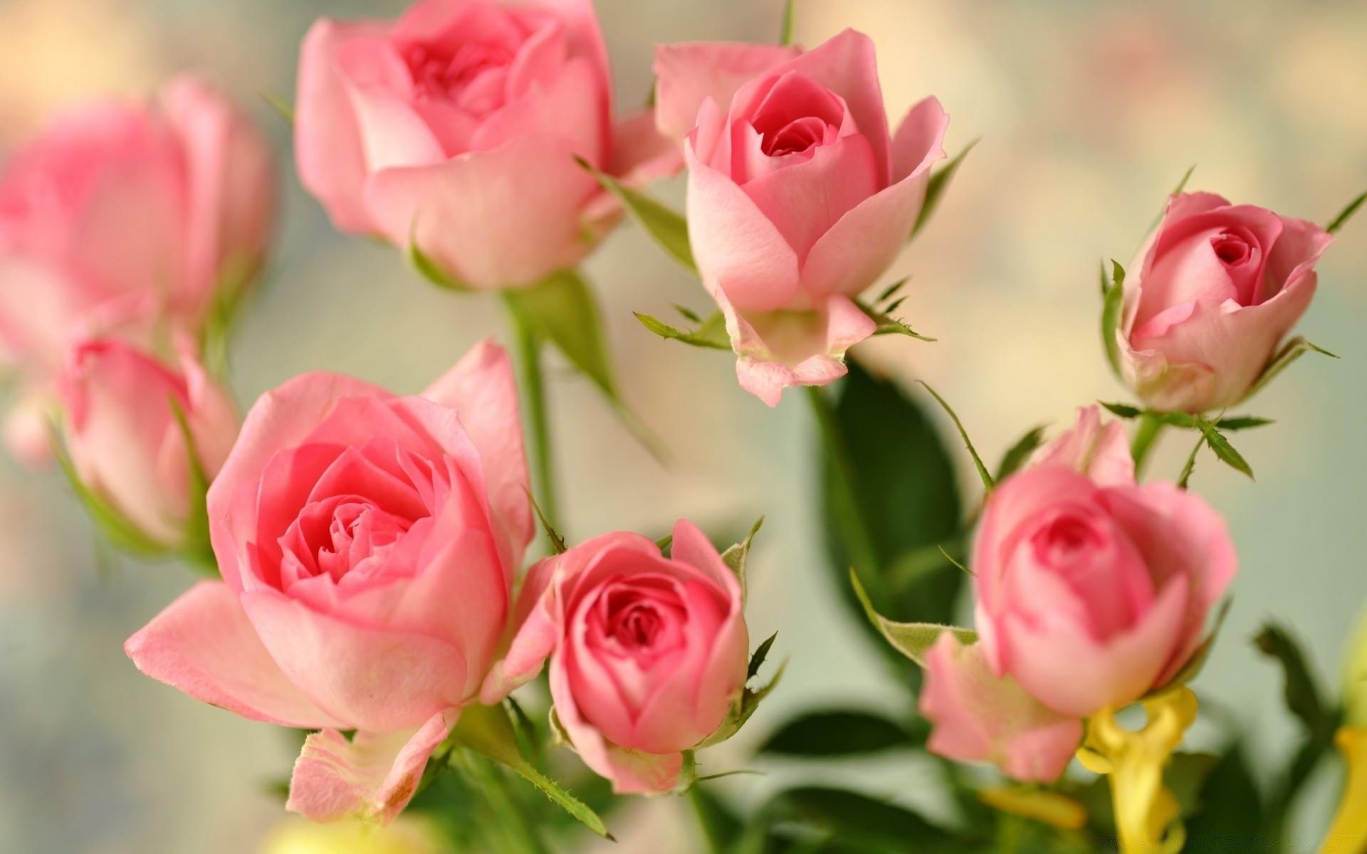 слышала картинка на рабочий стол розы нежные пальто драповые можно