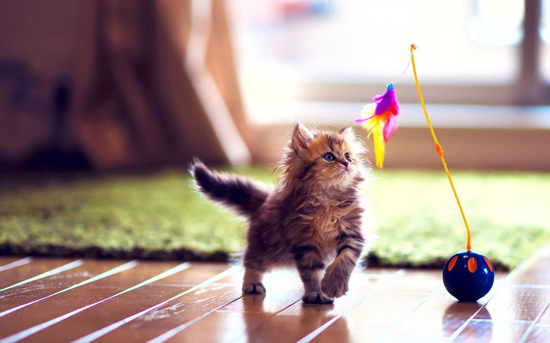 Best toys for cats to play with alone