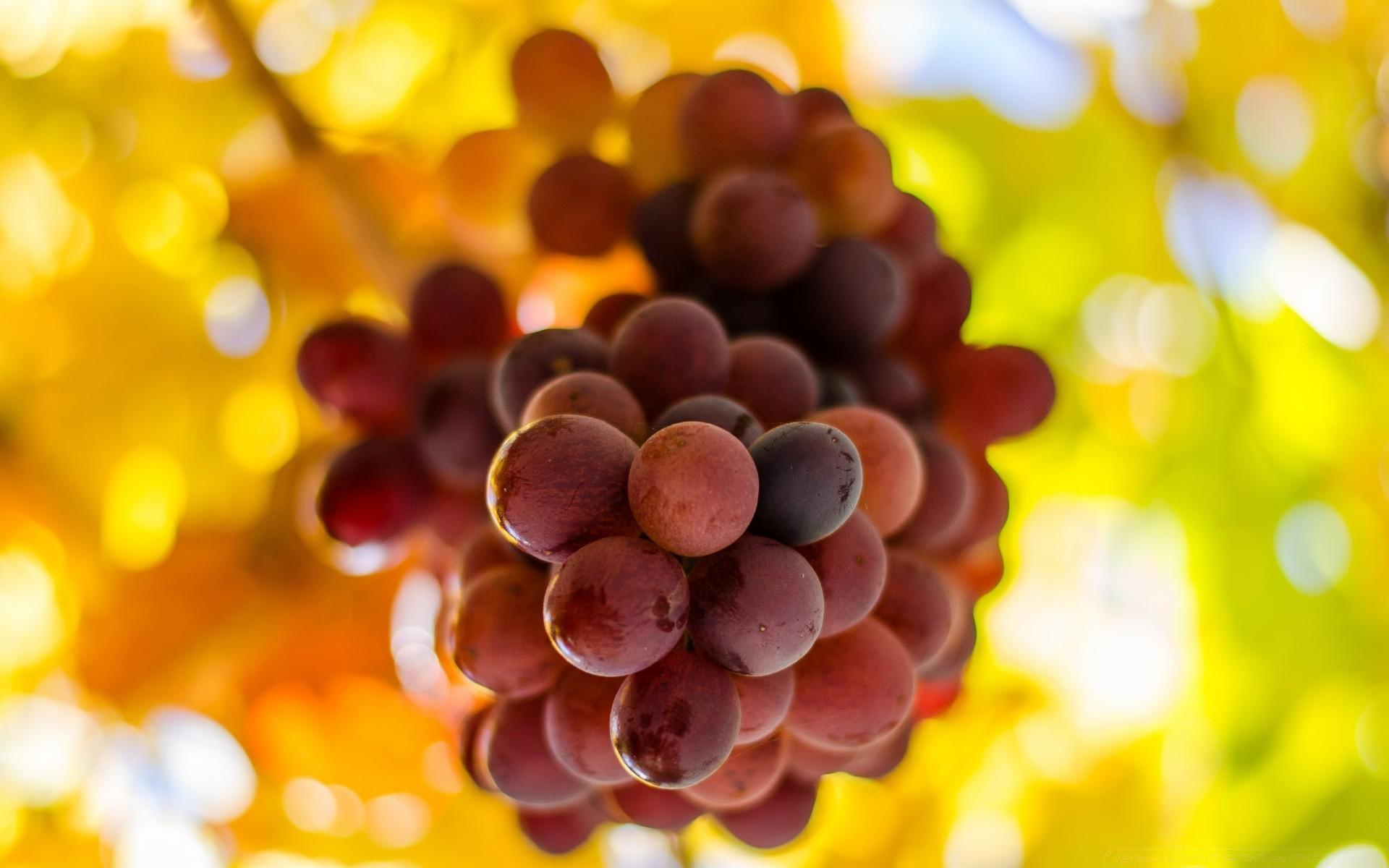 обзор виноградная открытка нас