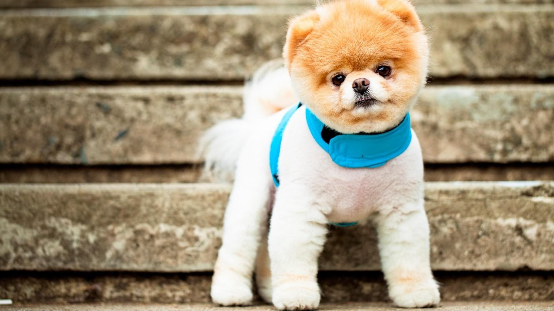 Фото собак маленьких милых маленьких пород