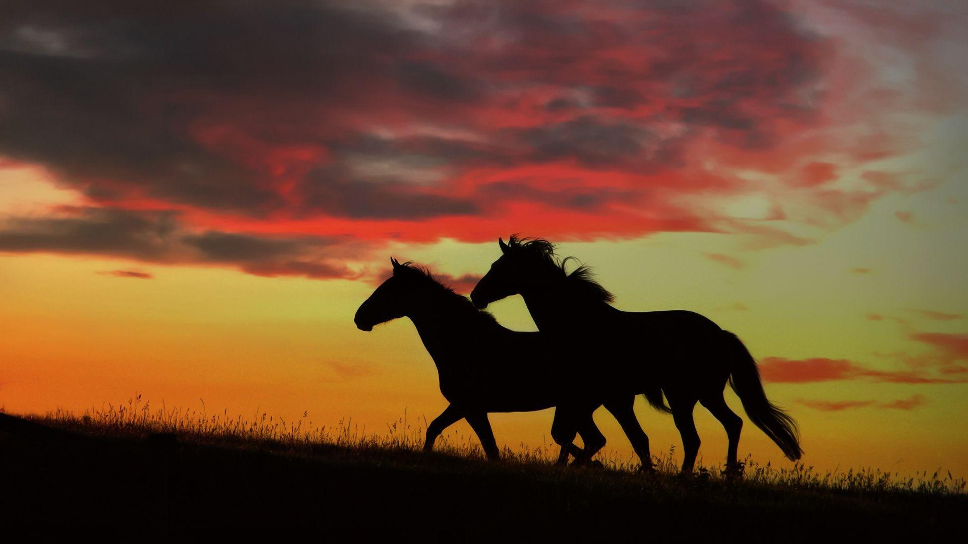Картинки мустангов лошадей на dom-cvety.com | 1080x1920