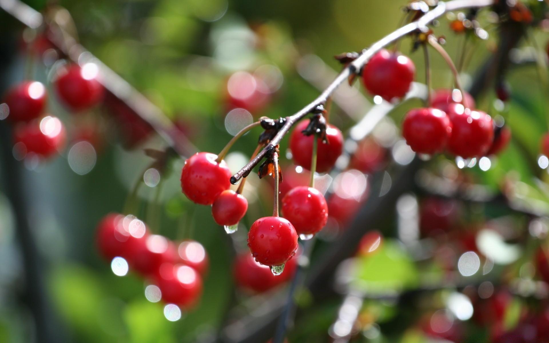 автомобиль картинки деревьев с фруктами и ягодами солдатова популярная