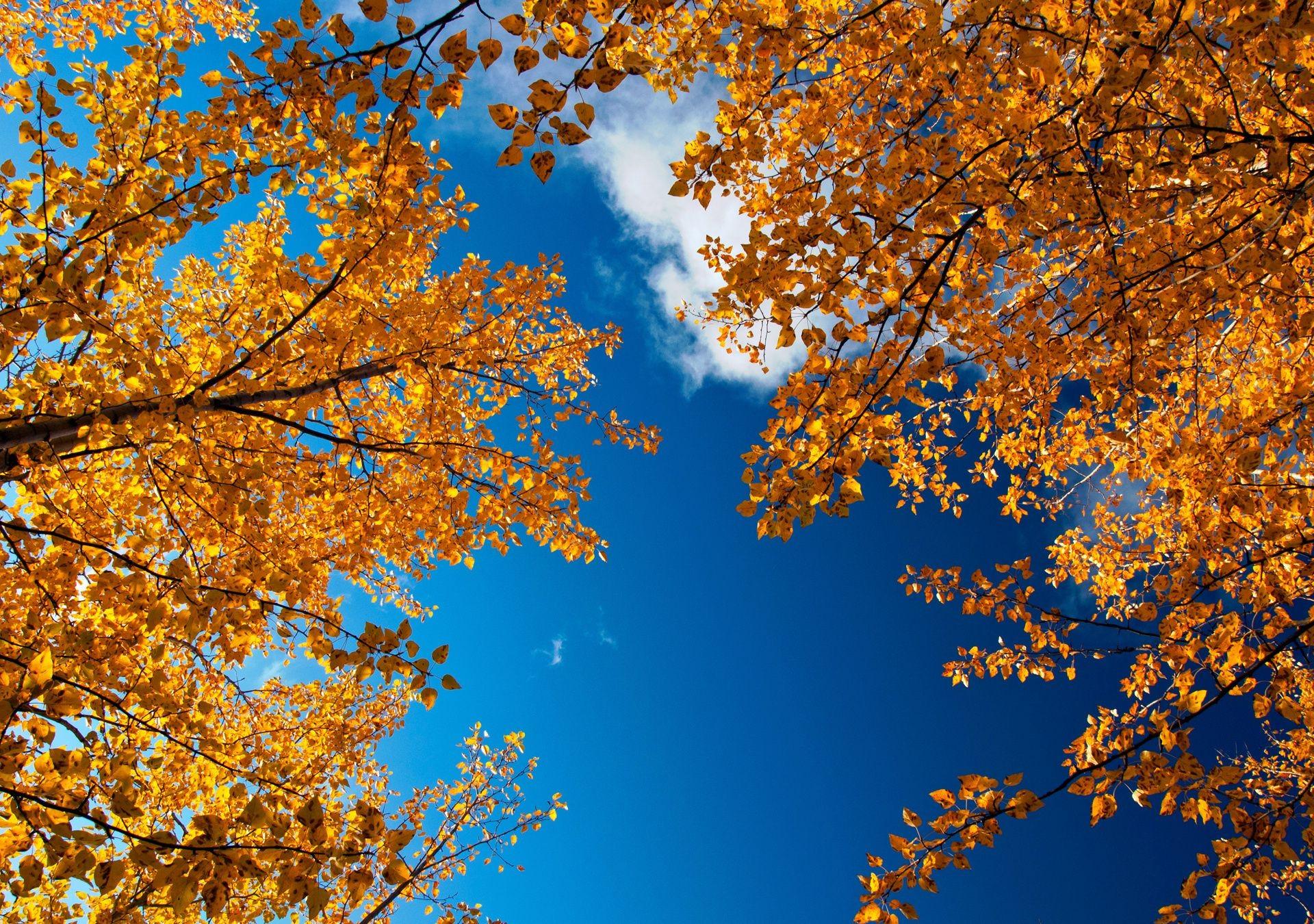 Обои для рабочего стола широкоформатные высокое качество золотая осень