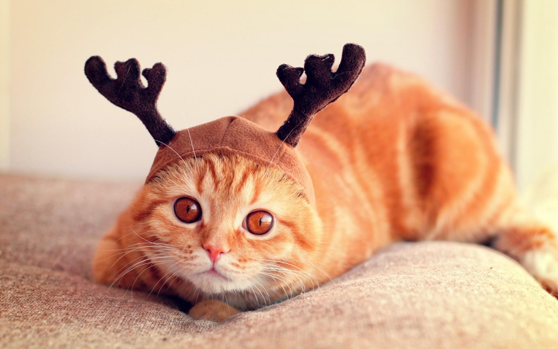 красивые картинки на телефон со смешными кошками приятная