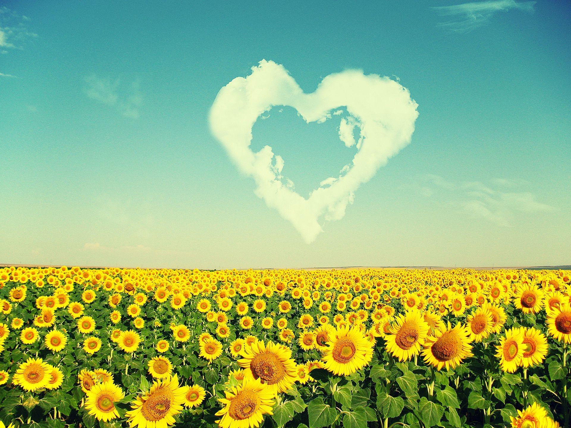 Открытки на цветы в украине