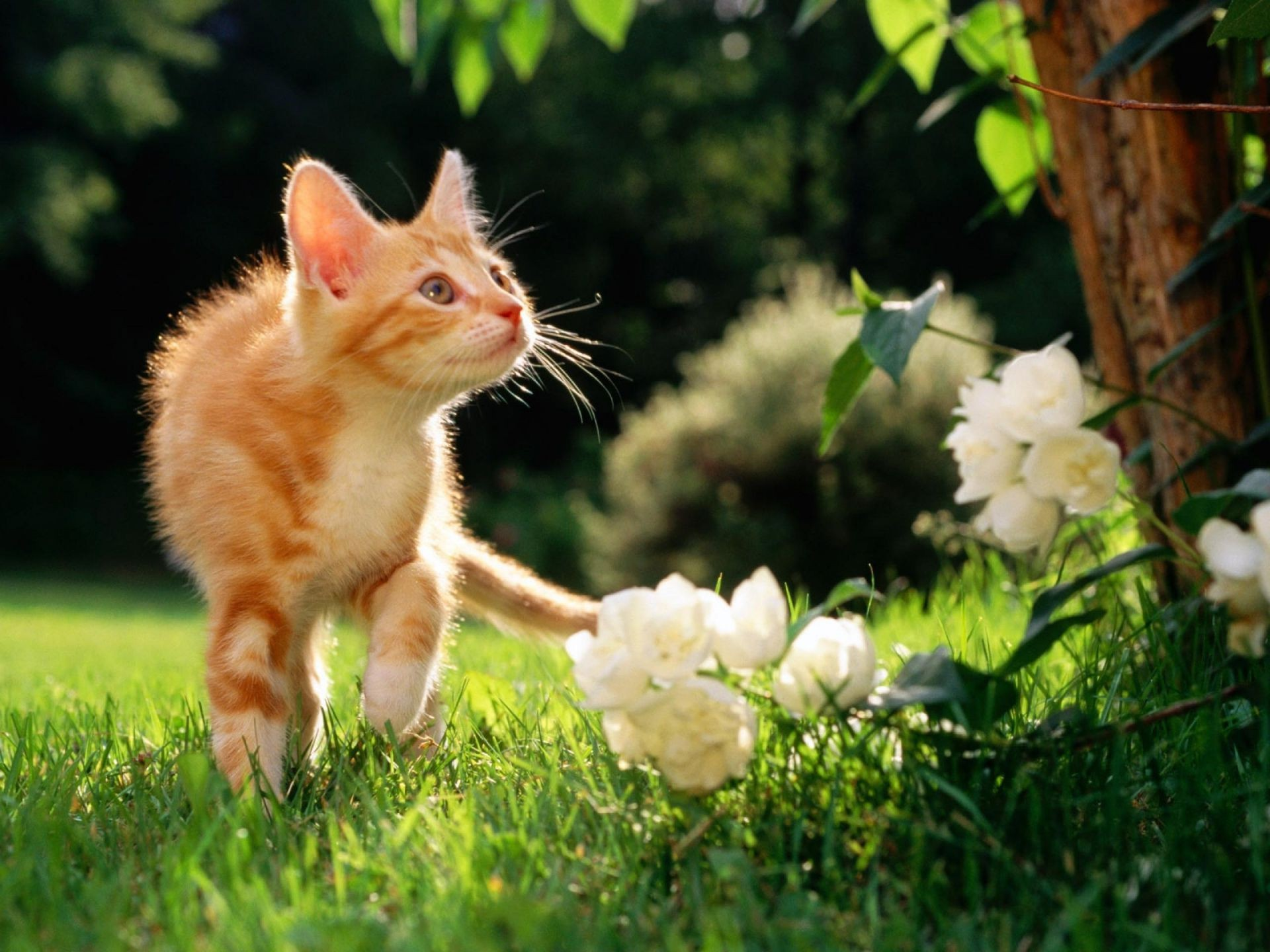 Котенок в мелкой траве  № 2953998 загрузить