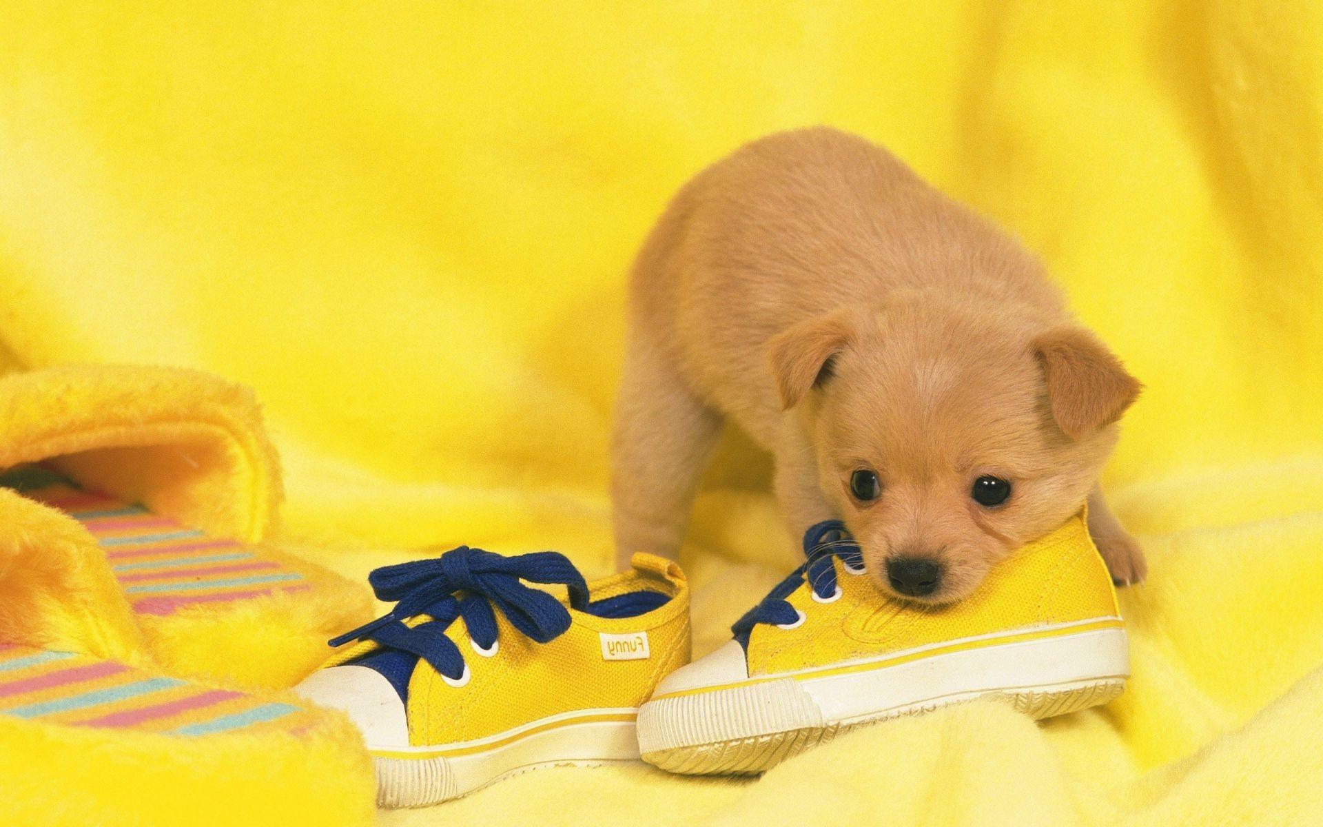 картинки собачка лапочка кабана засидки одна