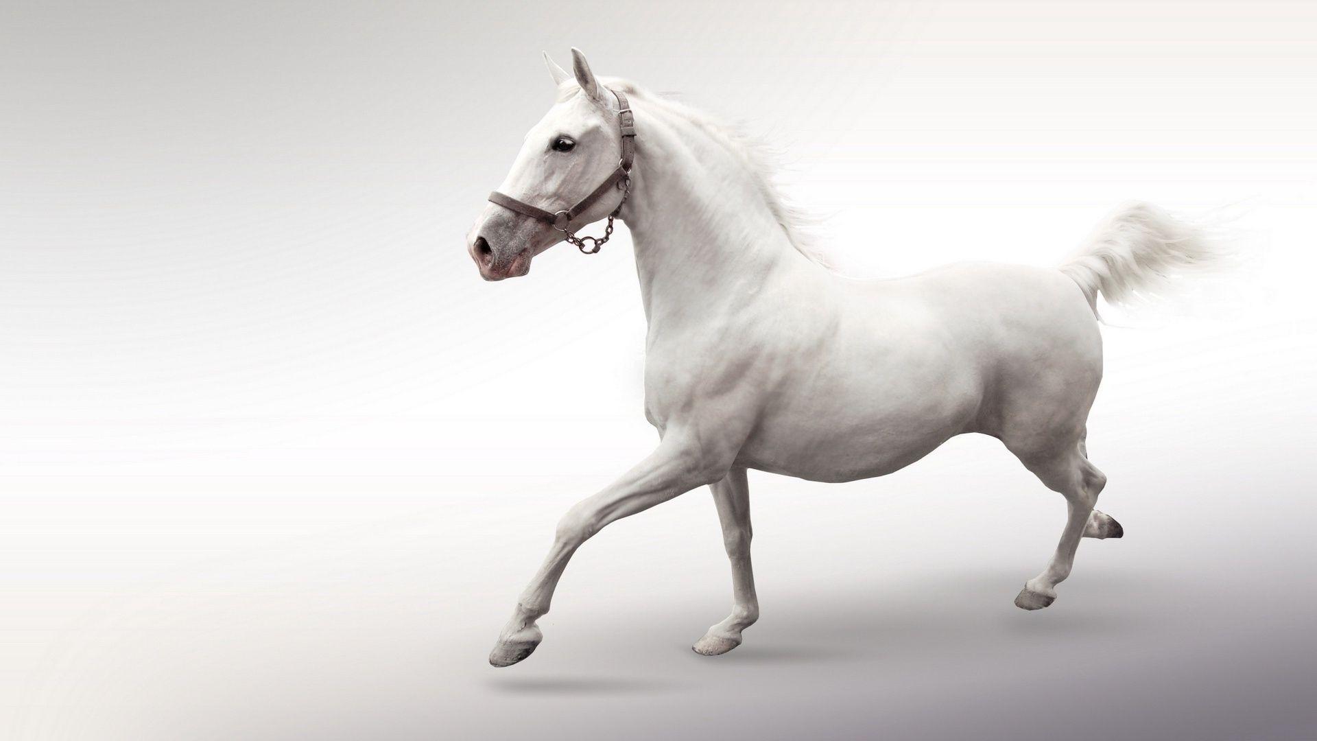 Три белые лошади бесплатно