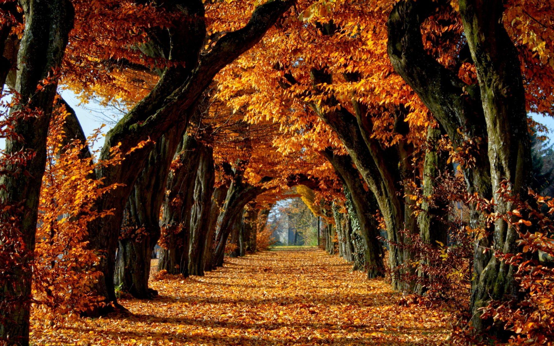 золотая осень лес обои на рабочий стол