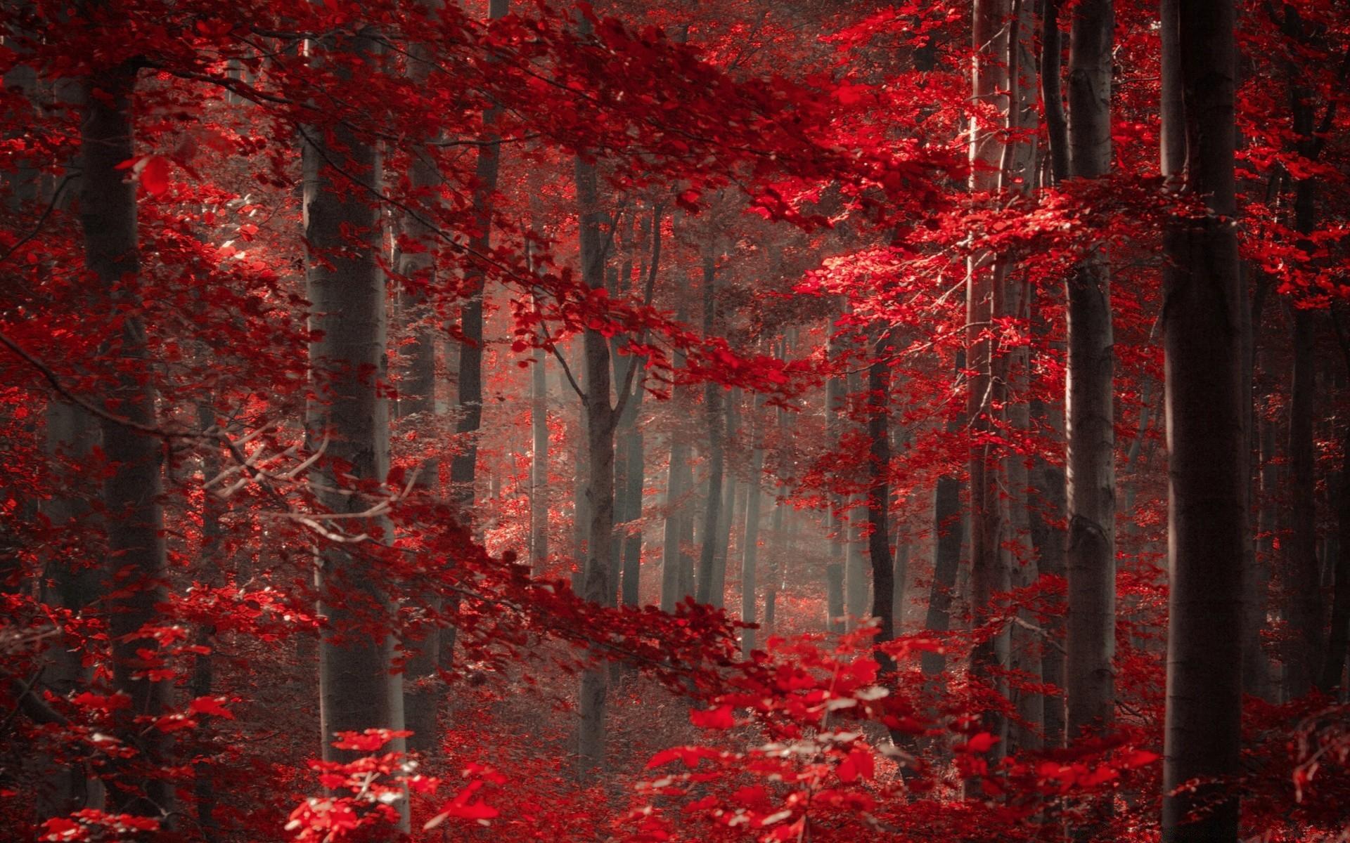 красный осенний лес  № 249309  скачать