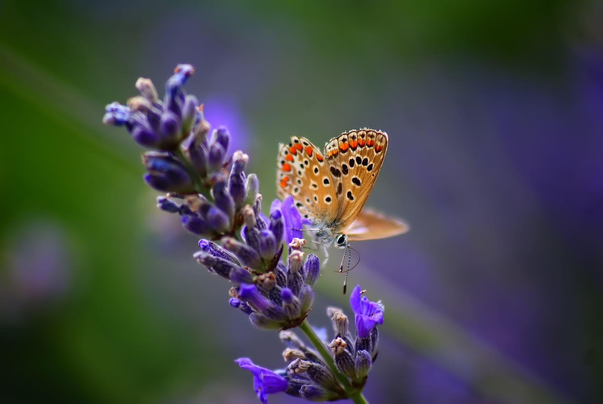 Обои насекомое, цветы. Природа foto 11