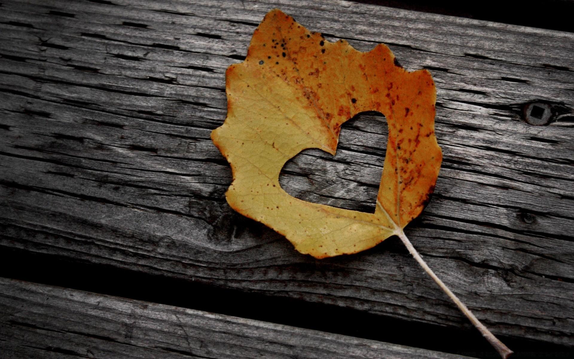 красивые картинки на телефон осень на доске упорно идёт