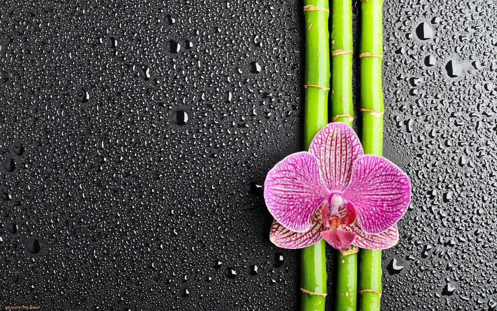 Правильная пересадка орхидей