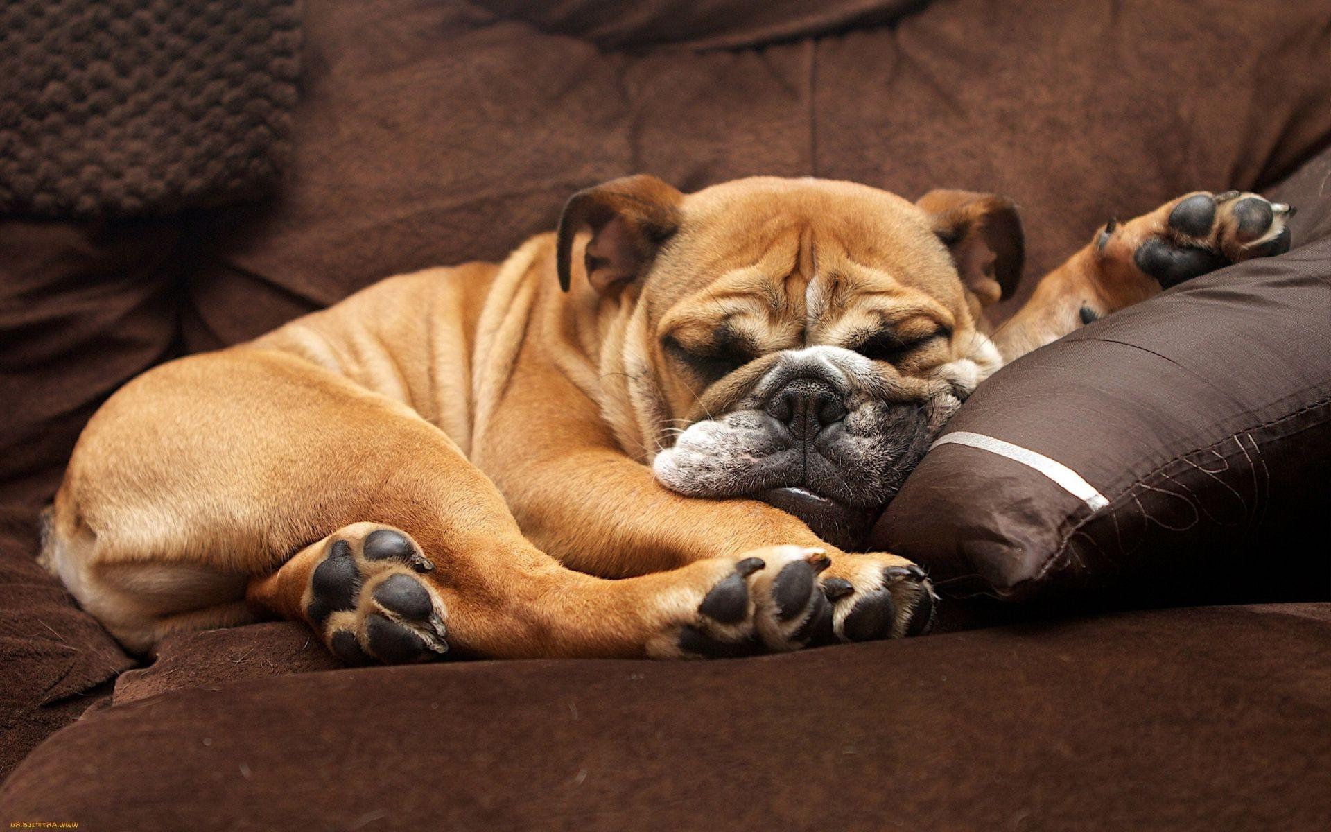 Картинки смешных животных спящих, старой