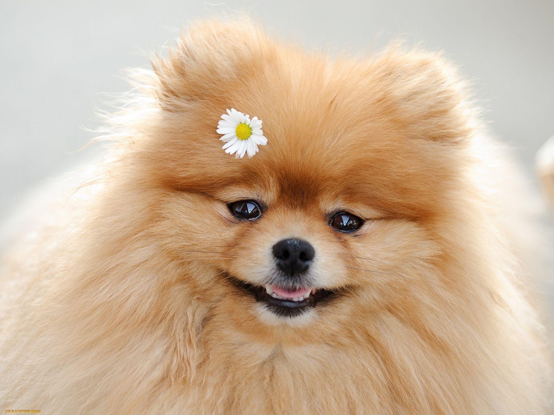 статус собака друг
