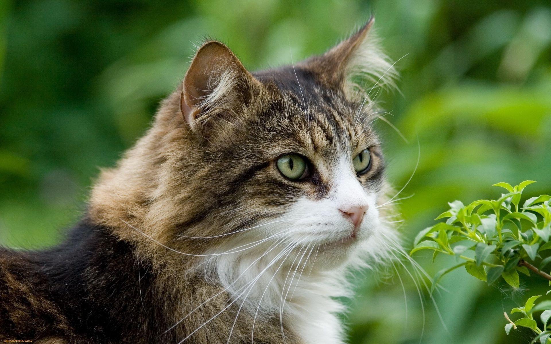 Улыбнись открытки, про котов картинки