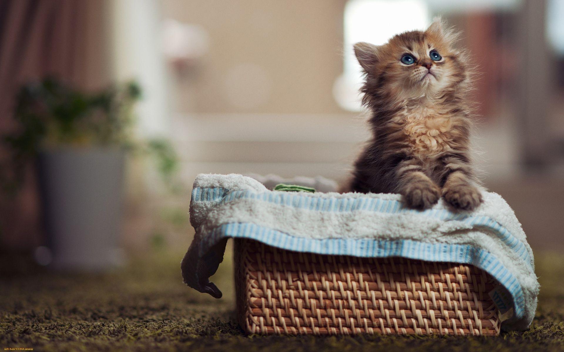 Самые милые картинки котиков в мире, внутри открытки своими