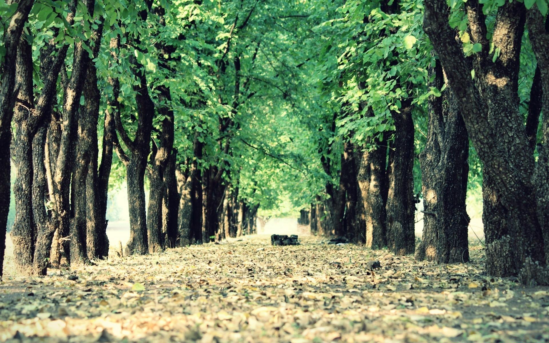 дерево листья парк  № 438498 загрузить