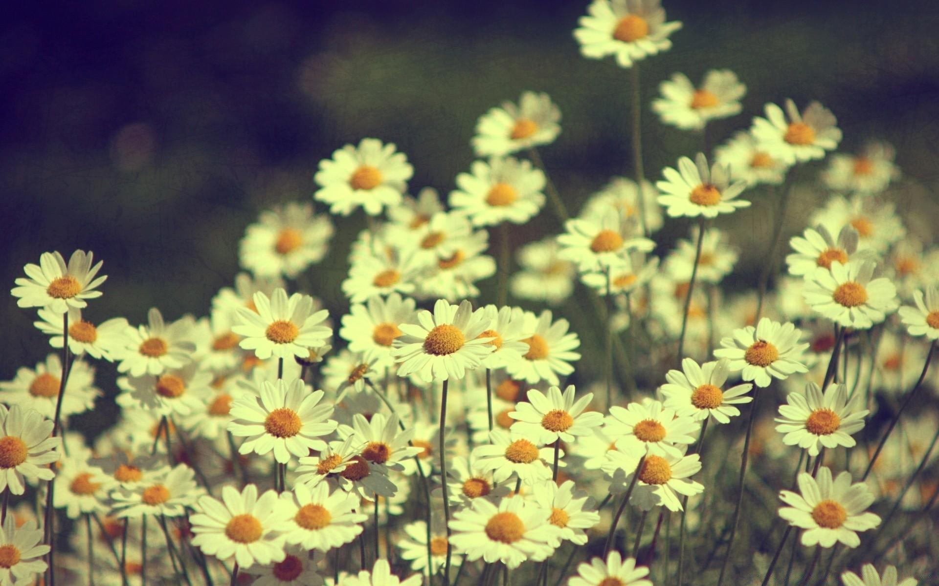 обои на телефон летние цветы всегда