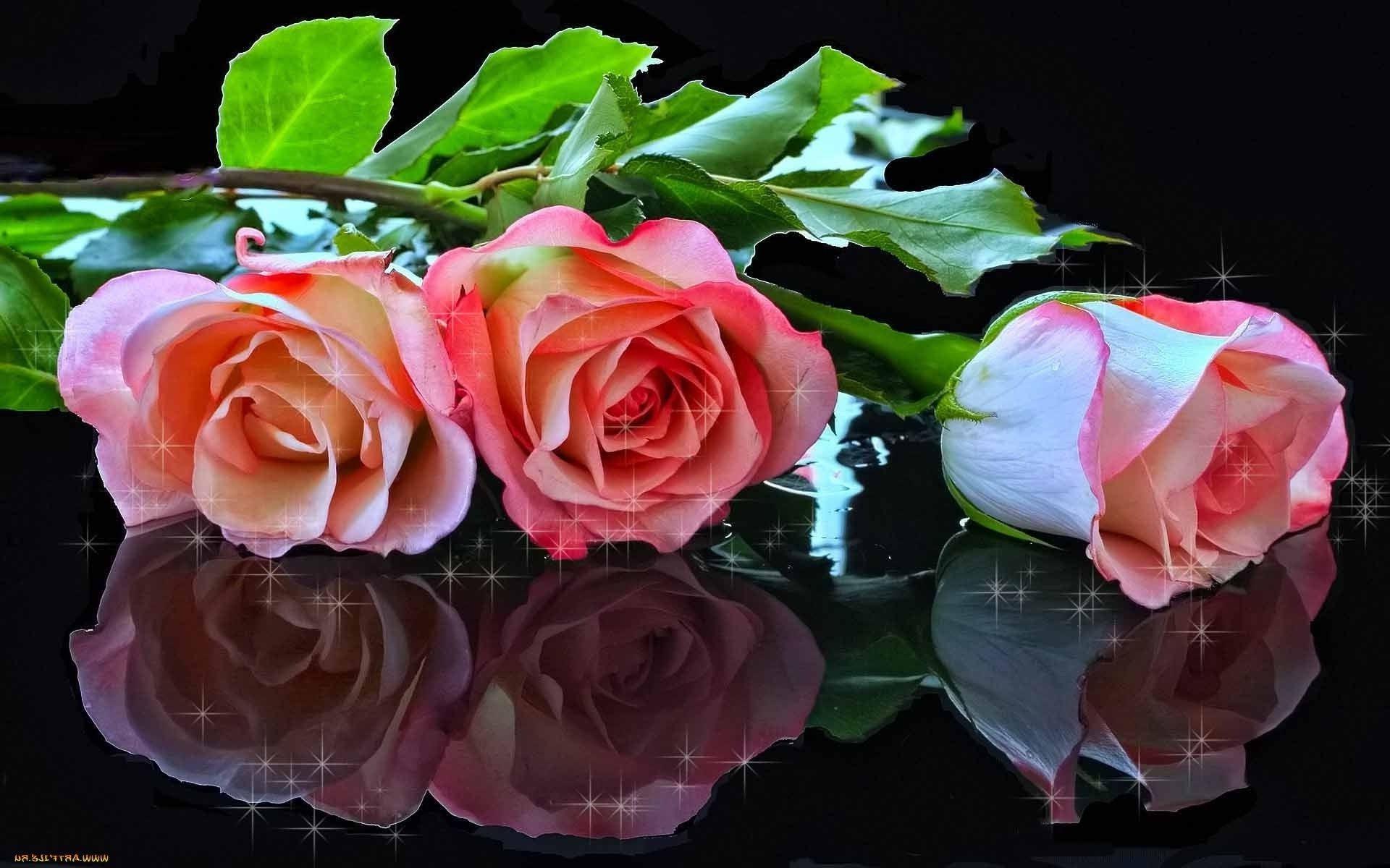 обои на рабочий стол самые красивые розы для тебя № 164821 без смс