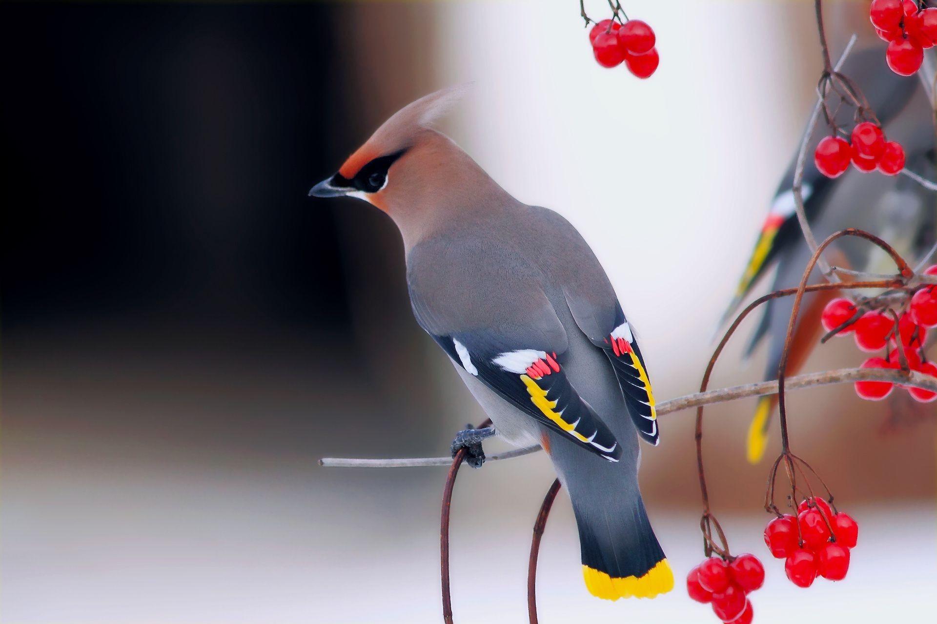 картинки на рабочий стол с птицами школы екатерина