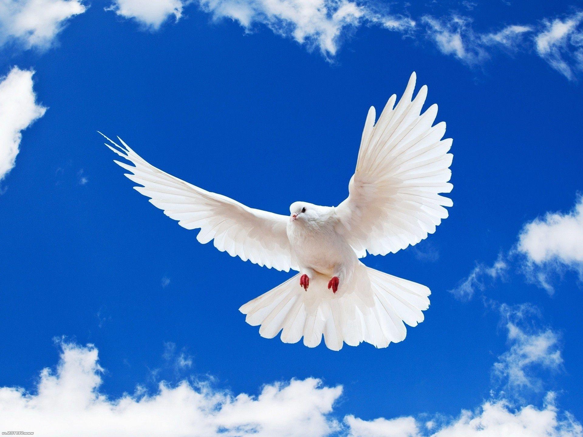 фото миру мир