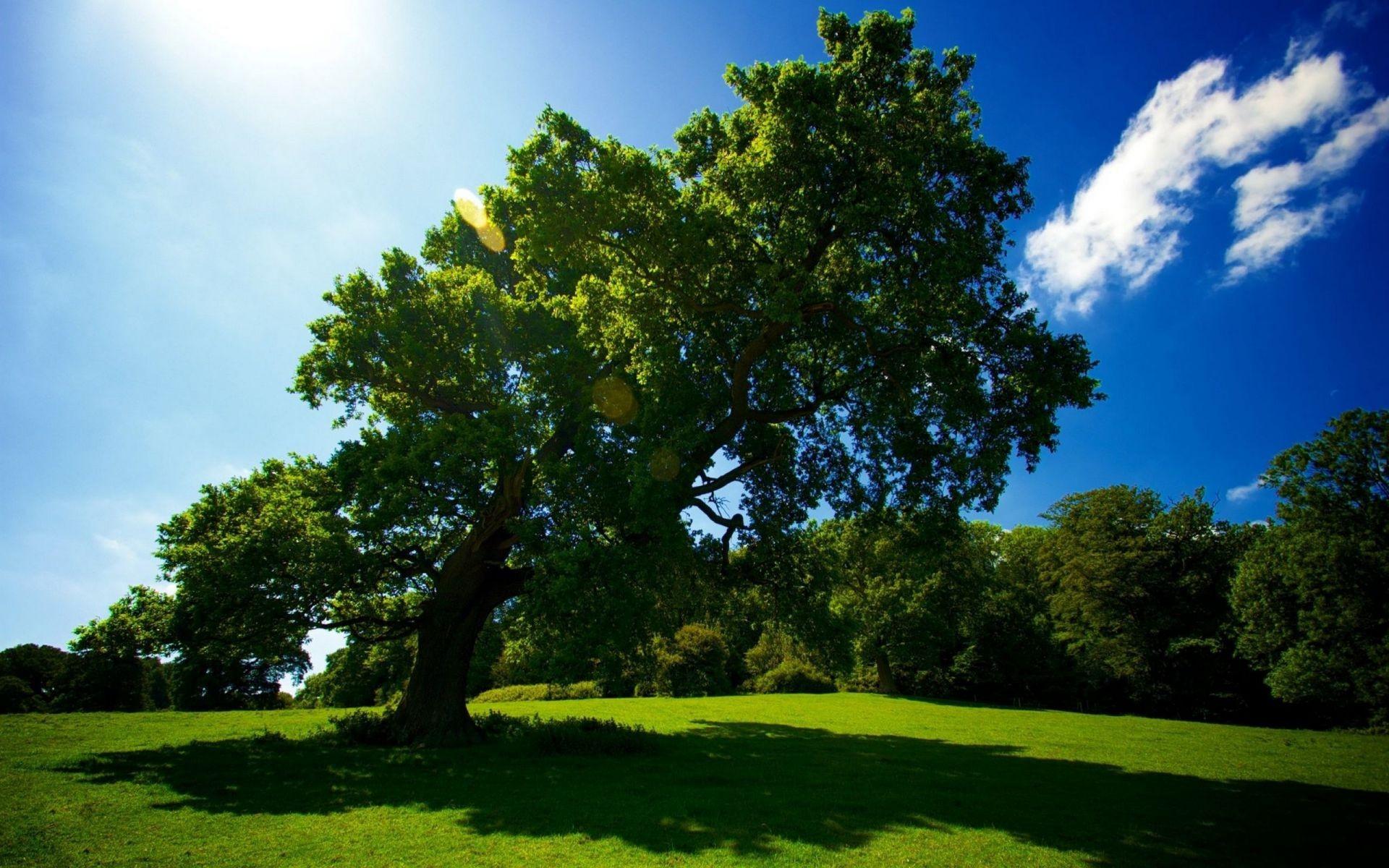 большое дерево  № 1647771  скачать