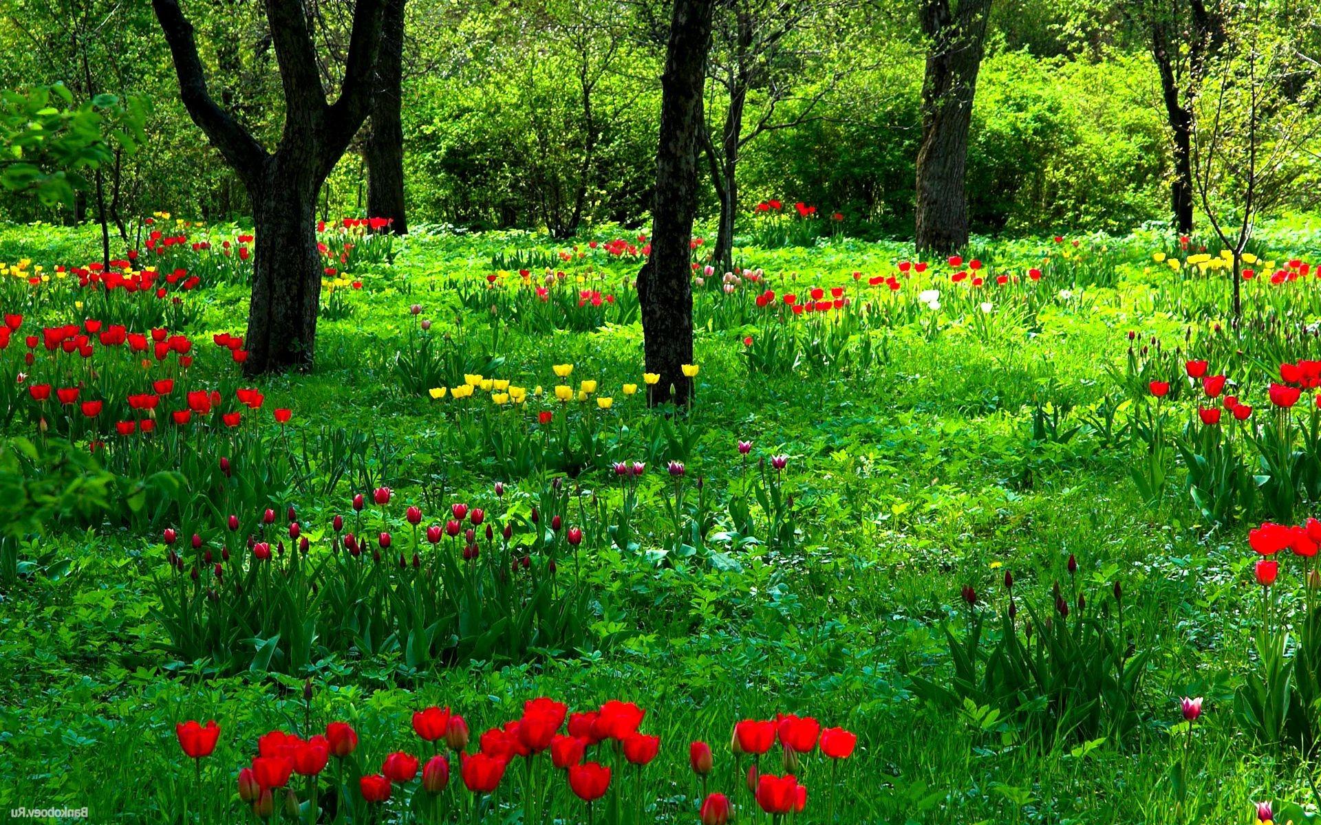 Красивые картинки на рабочий стол поляны цветов