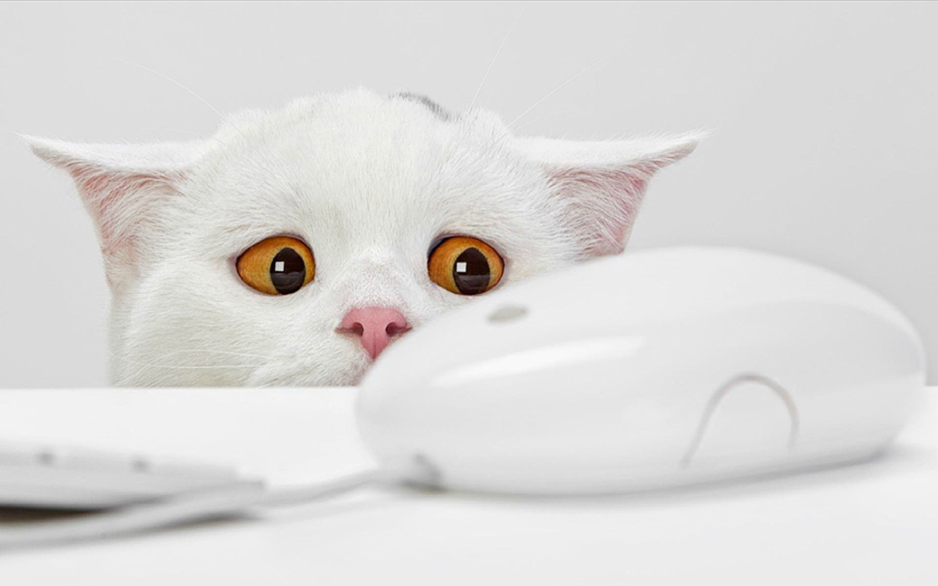 кошка язык глаза сердечки  № 2824856  скачать