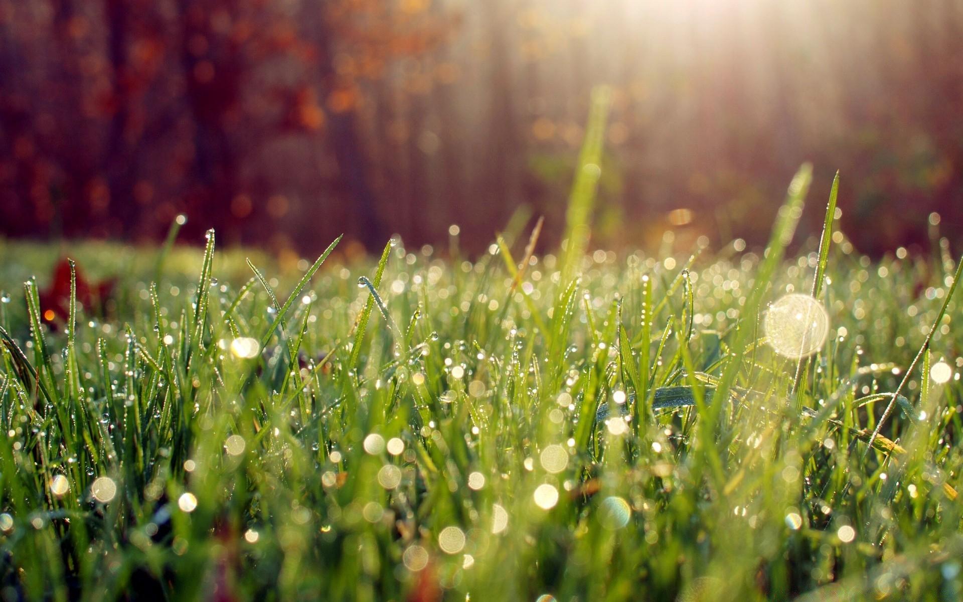 картинки лето природа роса торопятся