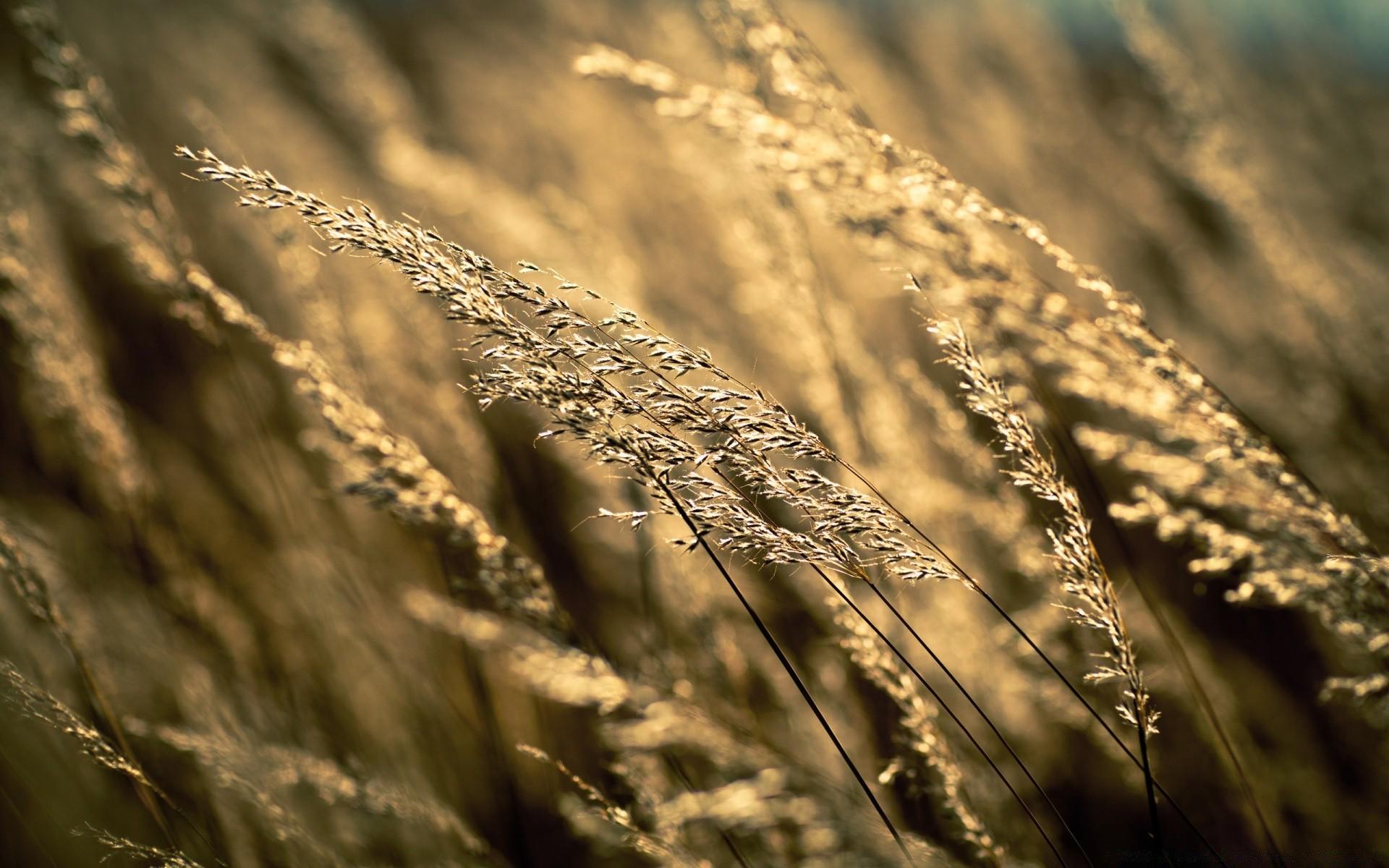 поле травы обои на рабочий стол № 31470  скачать