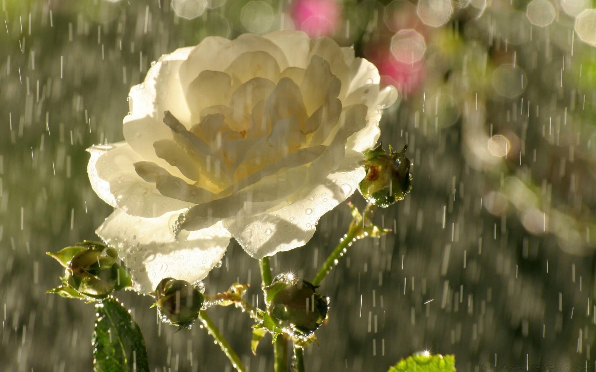 101, букеты в день свадьбы дождь и гроза