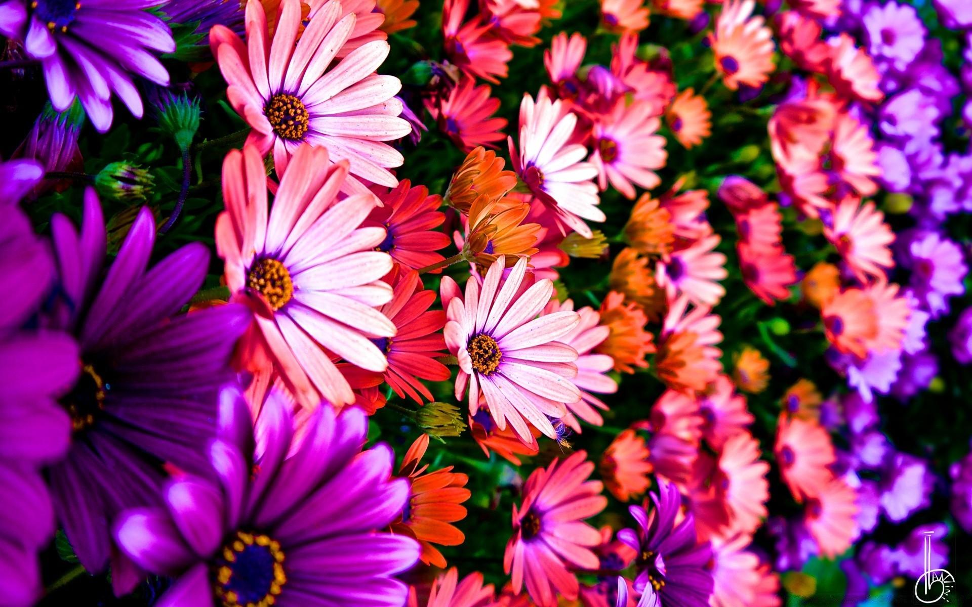 Цветные фото большого формата