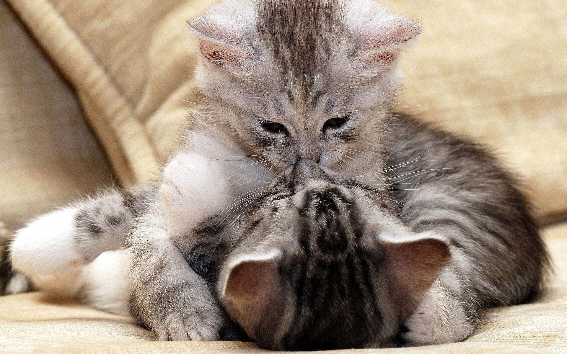 Открытки про любовь с животными