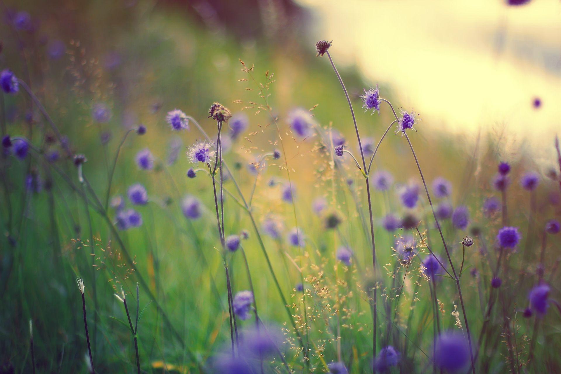 Трава макро цветы сиреневые полевые