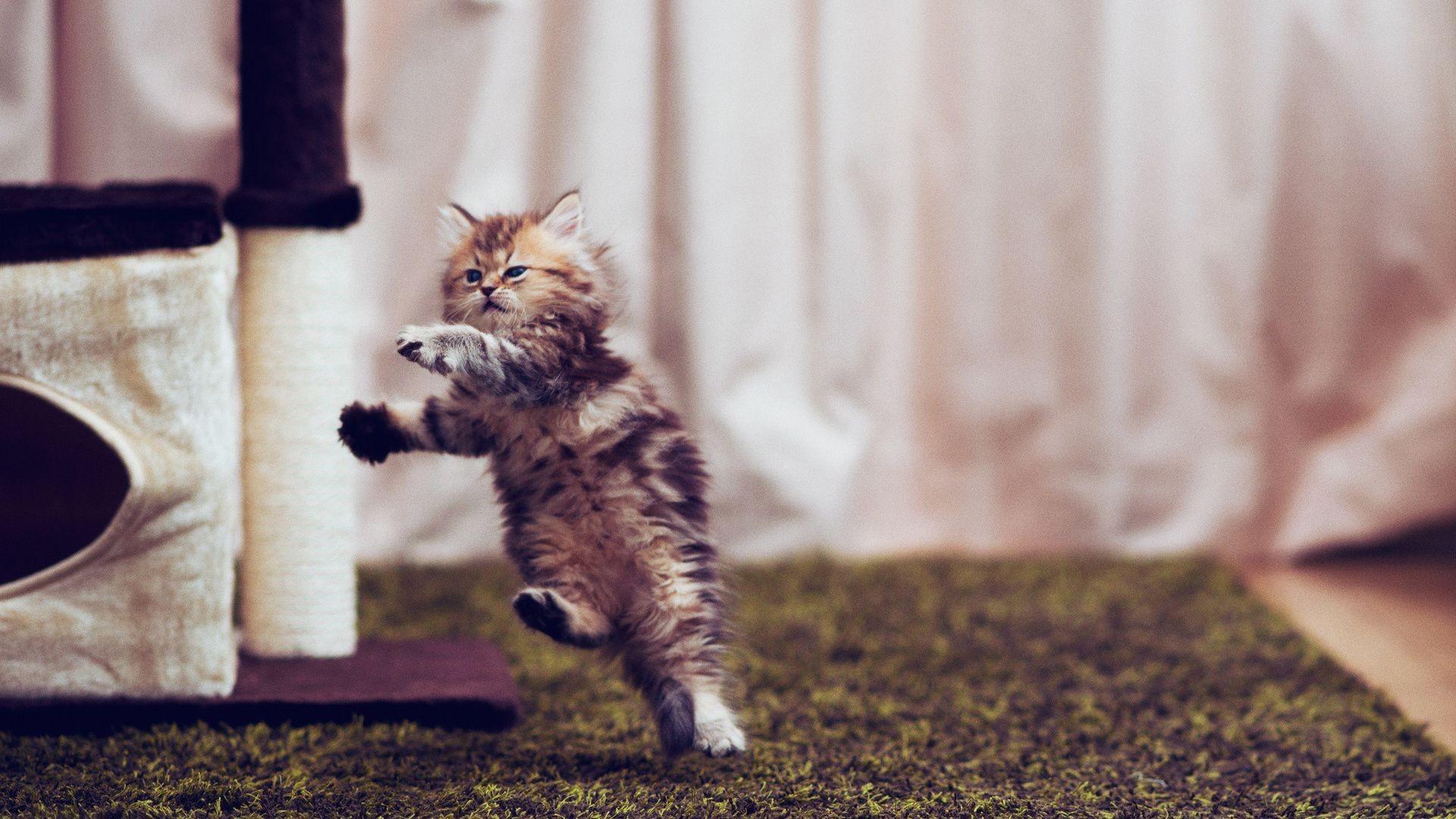Админ, самые смешные картинки котят